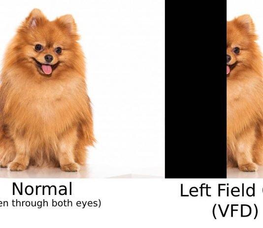 Field Cut Example