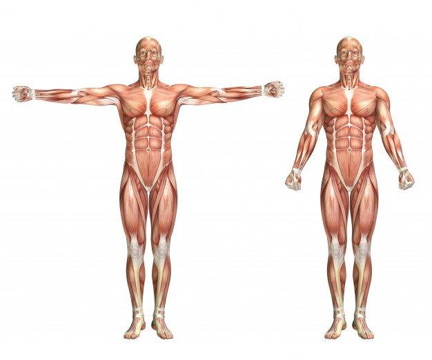Manual Muscle Test Calculator Image