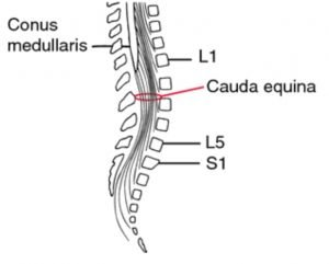 cauda-equina diagram