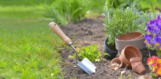 Gardening Intervention Ideas